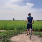 Ein Sack Reis von globaler Bedeutung