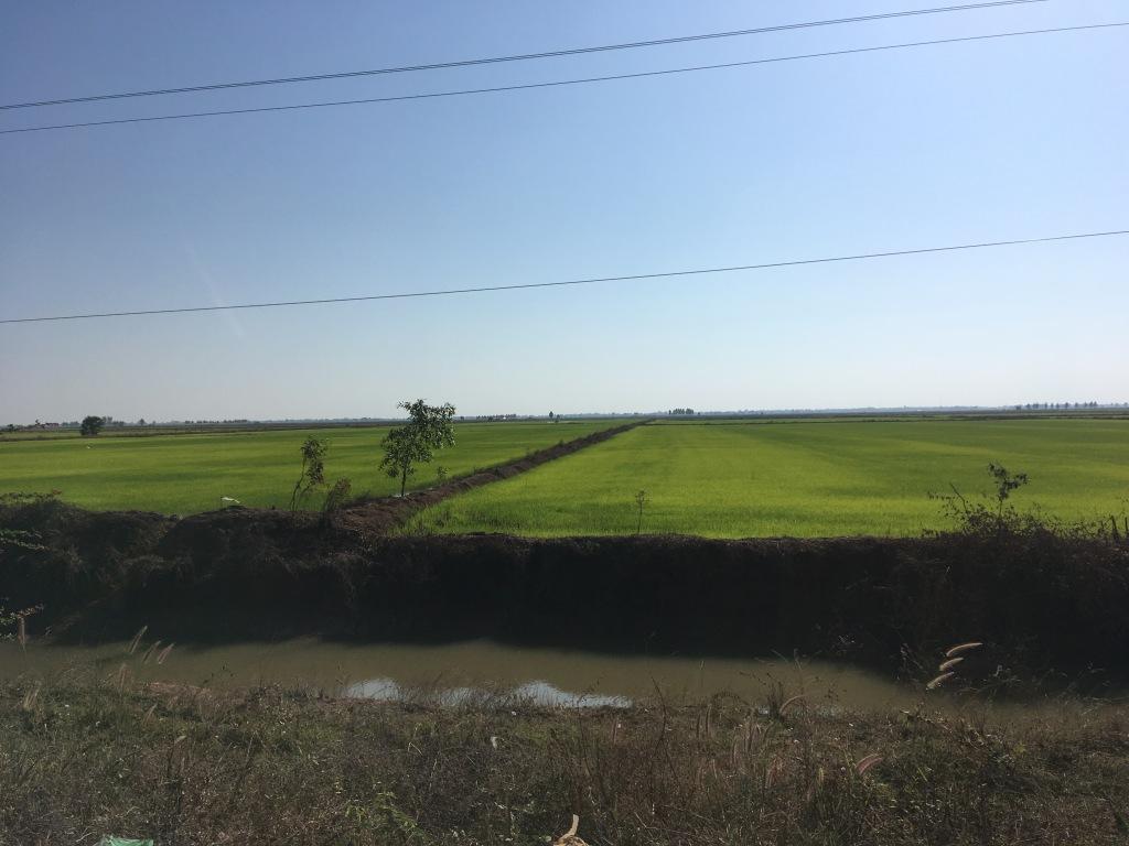 Wird Reis Schlecht